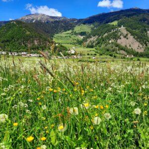 Blumenwiese Taufers